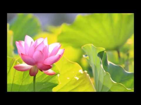 Hum Hum Tum Tum Lyrics - Asha Bhosle, Yunus Parvez