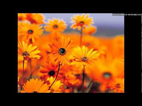 Ye Thandi Hawa Rangeen Fizaa Lyrics - Geeta Ghosh Roy Chowdhuri (Geeta Dutt), Shaminder Pal