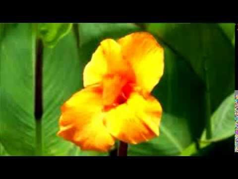 Yeh Raat Chandni Lyrics - Premlata
